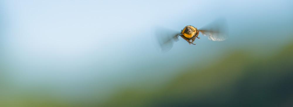 Eine Biene fliegt davon