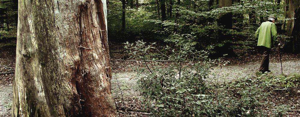 Mann am Stock spaziert durch einen Wald