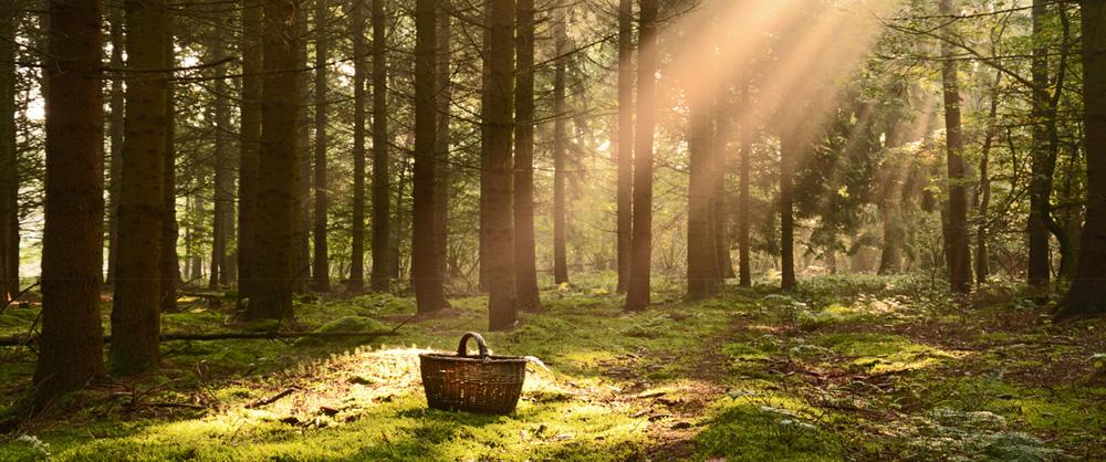 Korb auf einer Waldlichtung